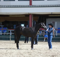 2007 Dusty Rock Filly At Show[1] (2)